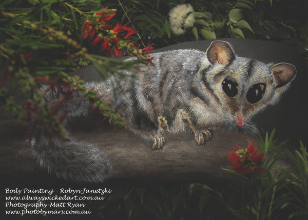 Sugar-glider-bosy-art-possum-body-painting-gold-coast-brisbane-australia